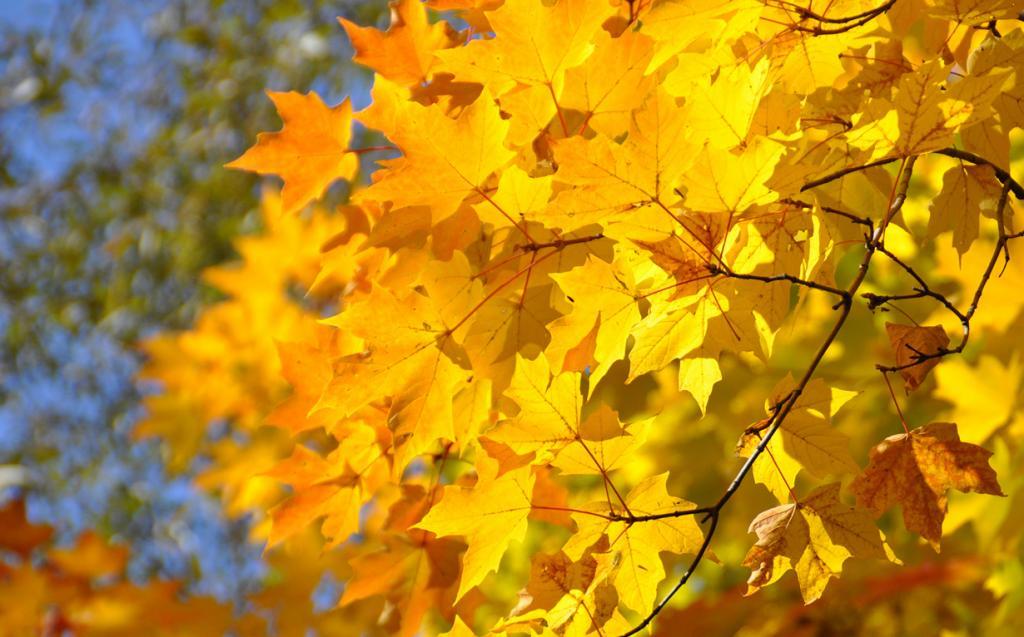 Осень. (Margaret Bourne)