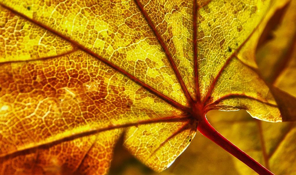Осень. (Sam Cox)