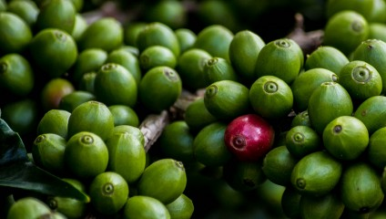 Эликсир бодрости. Рейтинг стран-производителей кофе (12 фото)