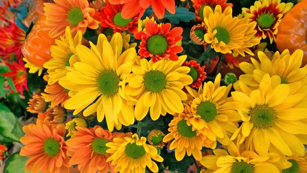Цветы Сентябрь Фото