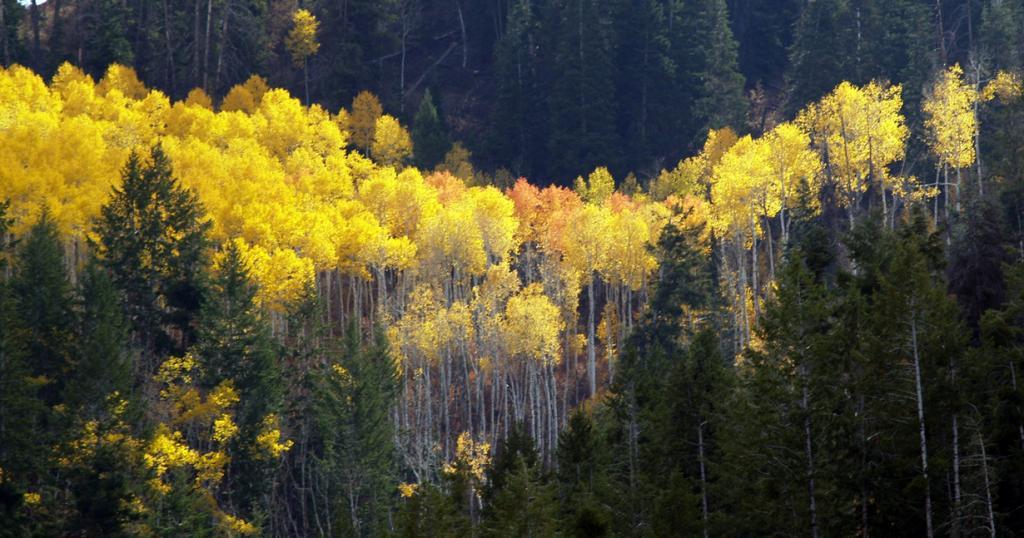 Осень. (Phil Konstantin)