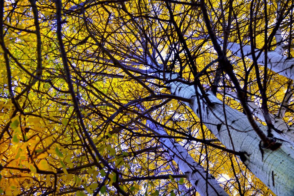 Осень. (Mark Stevens)