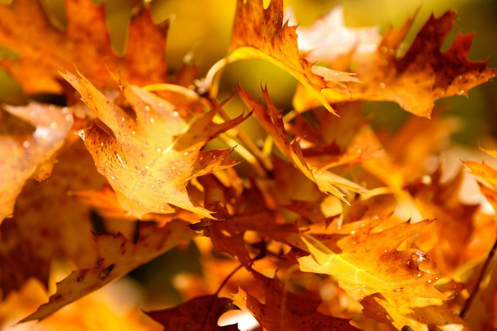 Цвет осени (21 фото)