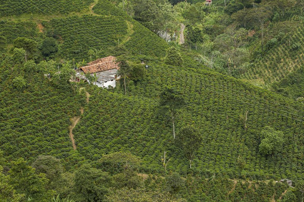3 место. Колумбия. 696 000 000 кг в год. (Francesco Veronesi)