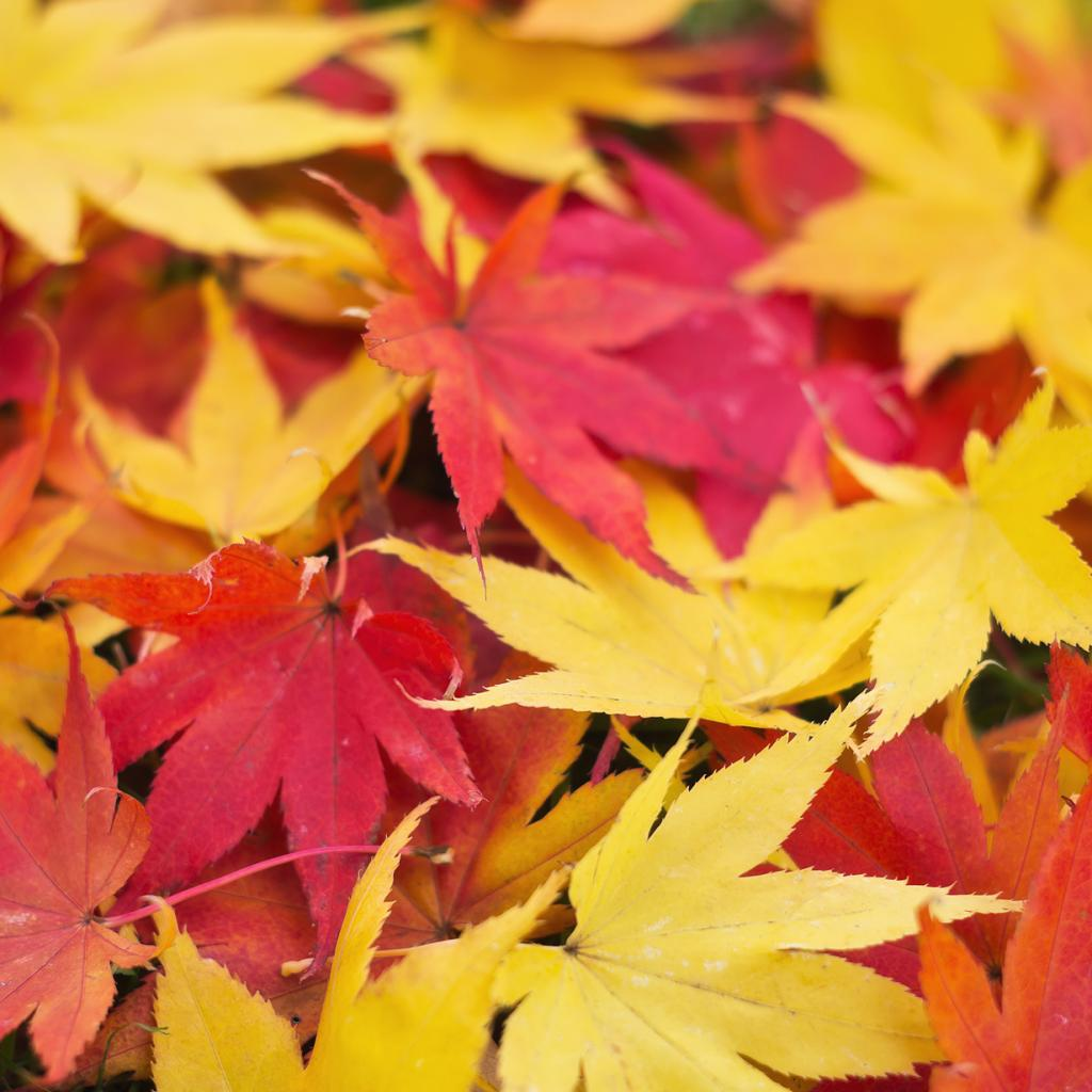Осень. (Hiroyuki Takeda)