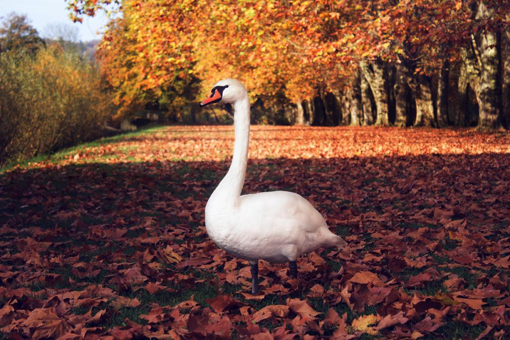Прогулка в осеннем парке 24 фото
