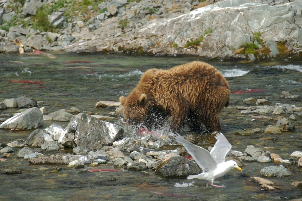 Во время рыбалки. (Dr.DeNo)