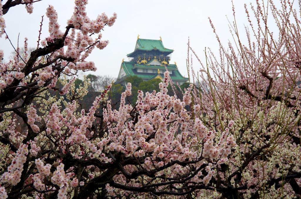 Япония. Осака. Замок в Осаке. Был основан в 1585 году. (pelican)