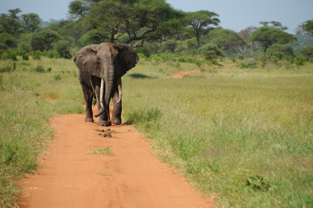 8 место. Слоны. На вид спокойные животные, обладающие весьма высоким интеллектом. Но на самом деле их поведение может быть весьма непредсказуемым; человеку, попавшемуся ему под ноги в неблагоприятный момент – не поздоровится! Ежегодно жертвами слонов становятся более 300 человек.  (Ben & Gab)