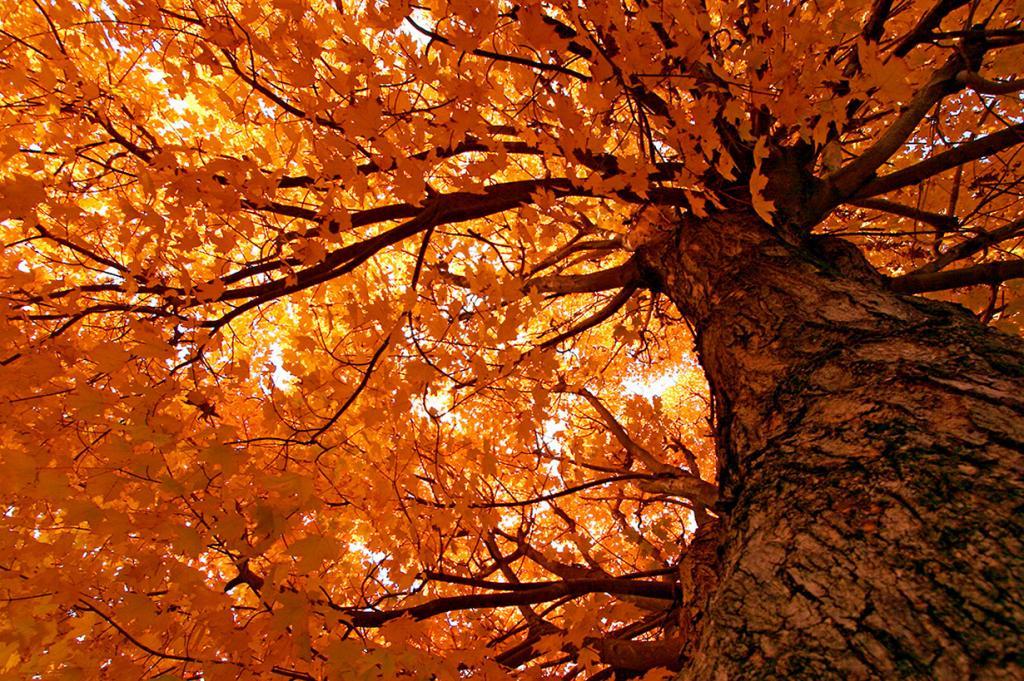 Осень. (Ben Collins)