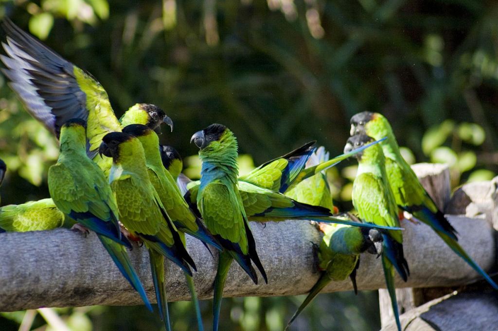 Brasil.  Pantanal.  (Fernando Stankuns)