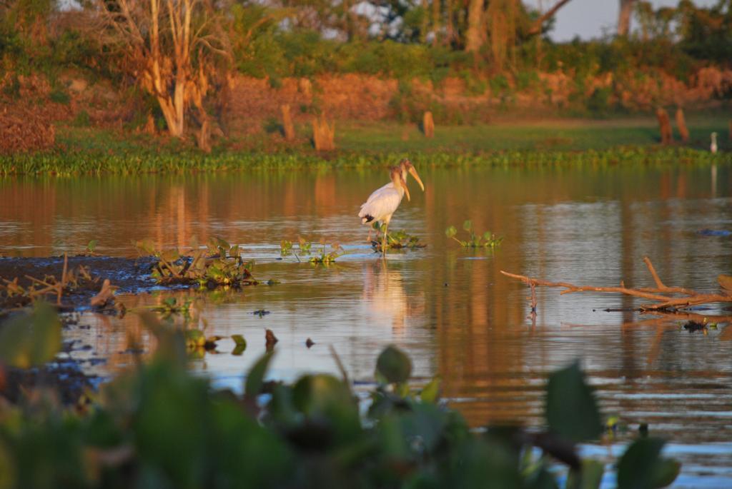 Brasil.  Pantanal.  (Ana Raquel S. Hernandes)