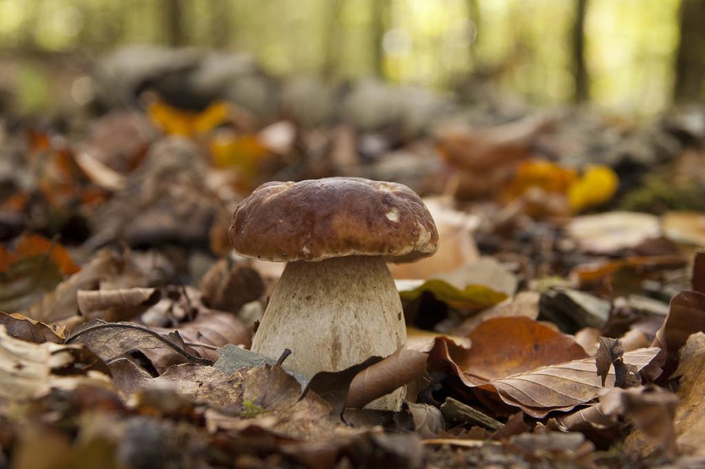 Грибы. Сентябрь-октябрь — самое время для сбора грибов, которых в это время в изобилии. Боровики, грузди, подберёзовики, подосиновики и это далеко не полный список осенних даров. Их можно сушить, варить, жарить, мариновать и засаливать. (cartonve)