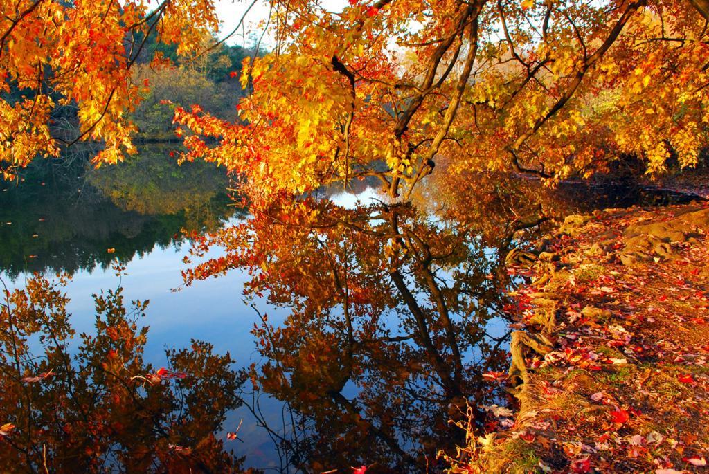 Осень. (clarkmaxwell)