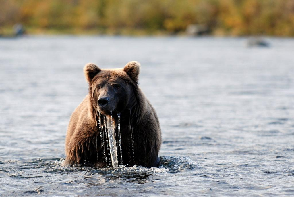Во время рыбалки. (Charlie Kindel)