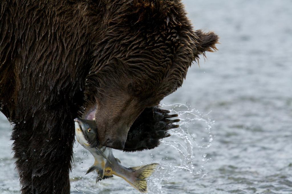 Во время рыбалки. (patrickmoody)