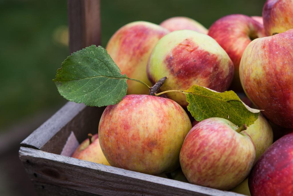 Яблоки. Содержат витамины А, В1, В2, В3, В6, В9, С, Е, Н, PP. Лучше всего яблоки употреблять в сыром или печённом виде. (Jim Belford)