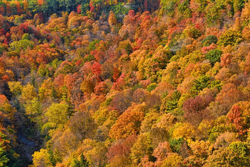 Осень. (Gary Simmons)