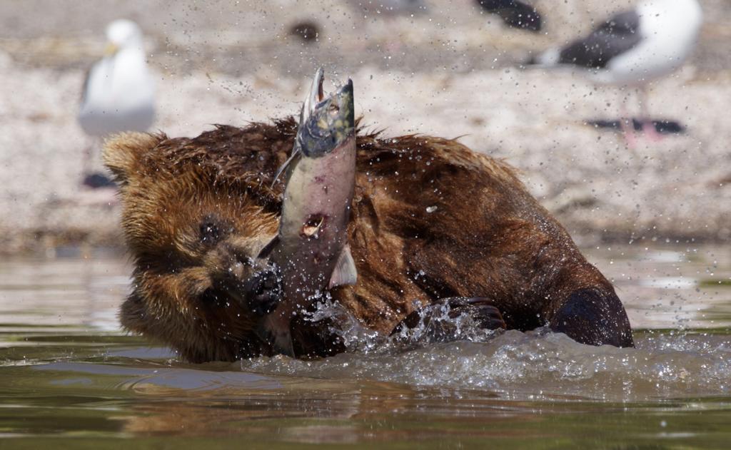 Во время рыбалки. (Harald Deischinger)