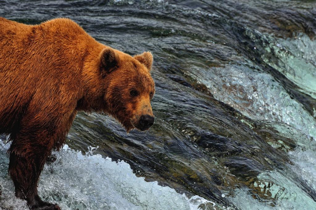 Во время рыбалки. (Mark Stevens)