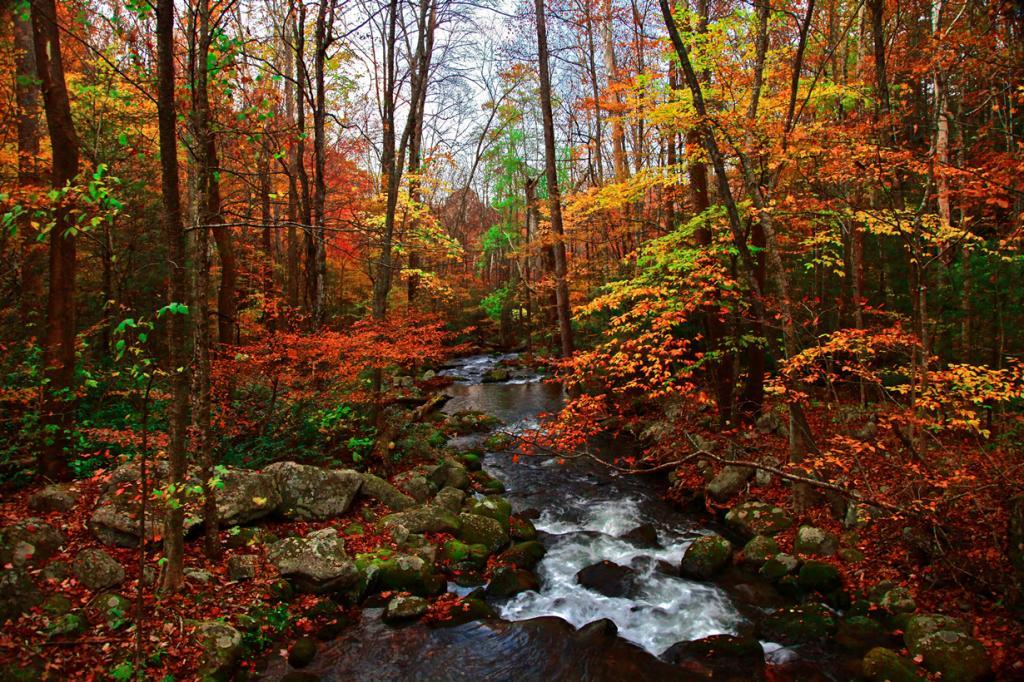 Осень. (Joey Lax-Salinas)