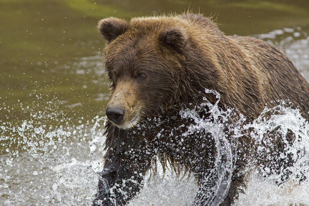 Во время рыбалки. (Eric Gorski)