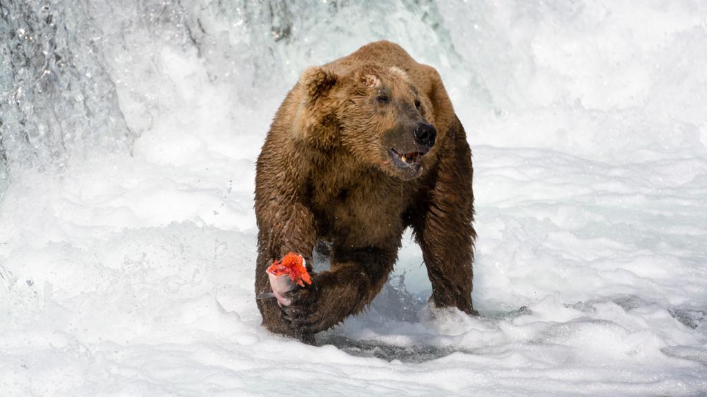 Секреты рыбалки от медведей (13 фото)