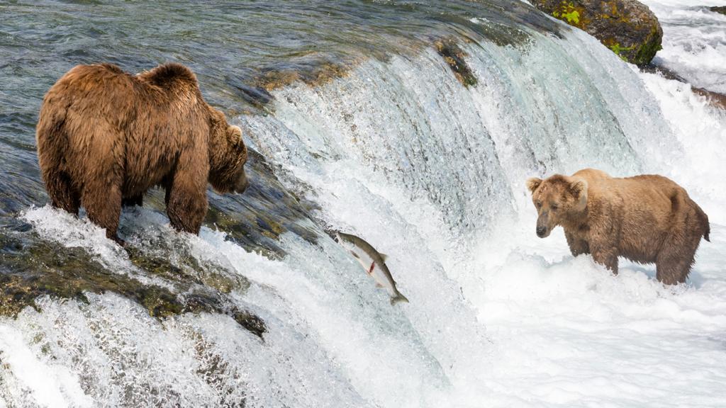 Во время рыбалки. (Christoph Strässler)