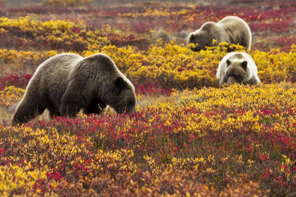 США. Аляска. Прогулка по Национальному парку Денали. (NPS Photo/Jacob W. Frank)