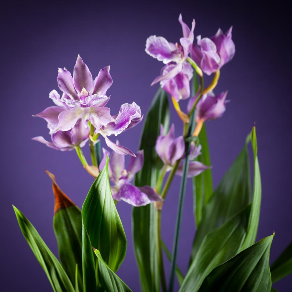 Орхидея Zygopetalum. (Peter Kemmer)