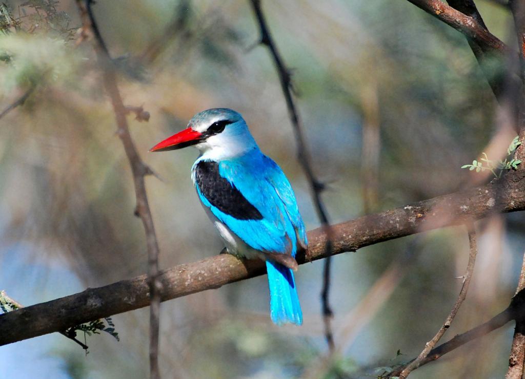 россии самые в красивые фото птицы