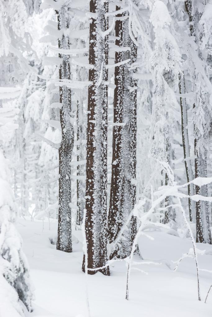 Заснеженный лес. (karlhans)