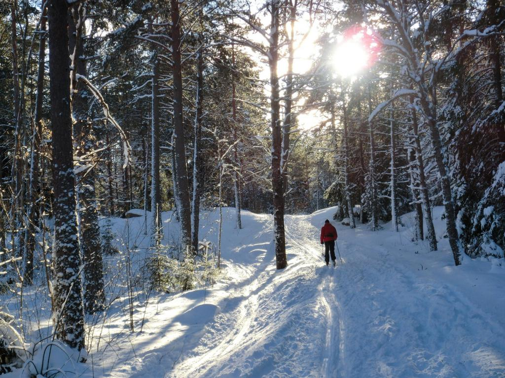 Заснеженный лес. (Kjell Carli)