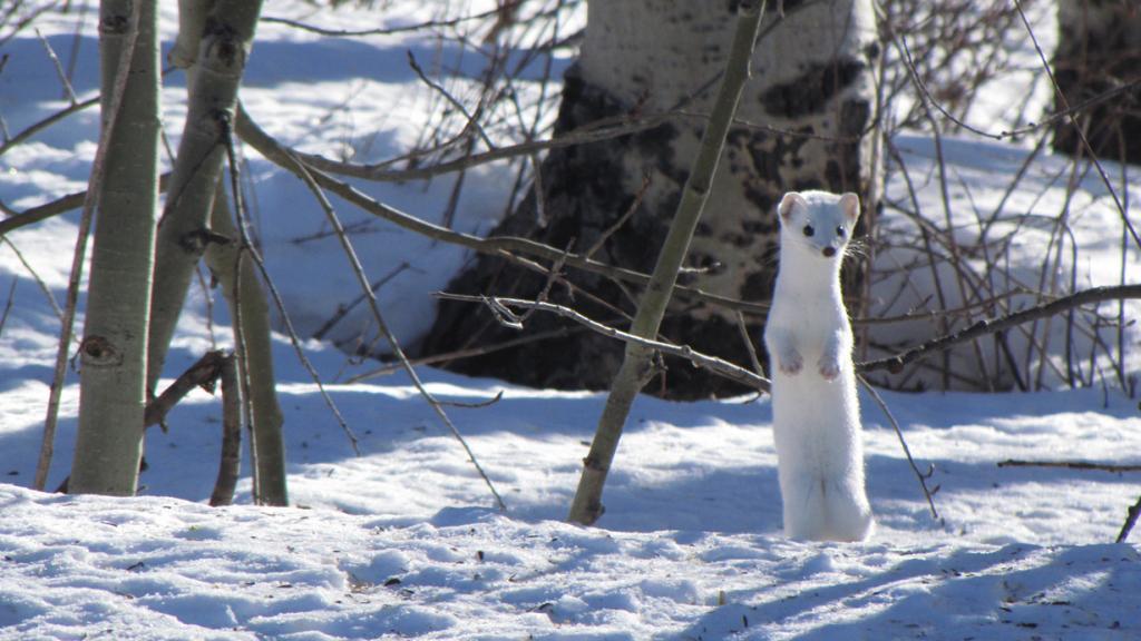 Зима. (Bryant Olsen)