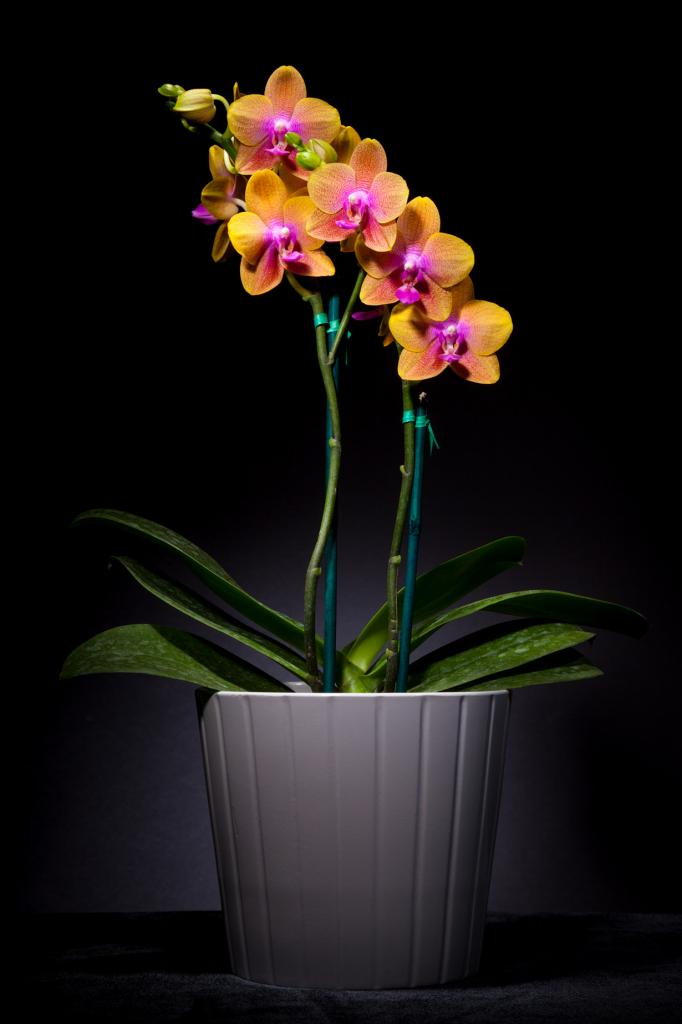 1 место. Орхидные. (Peter Kemmer)