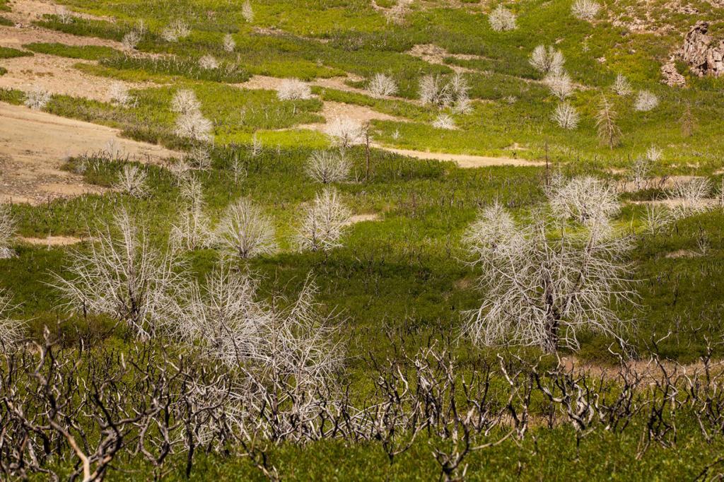 Мёртвые деревья у гор Ла-Саль. (Andre Radke)
