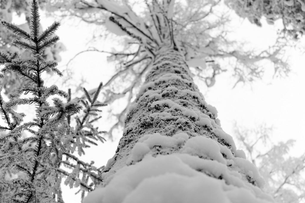 Заснеженный лес. (Artem Marchenko)