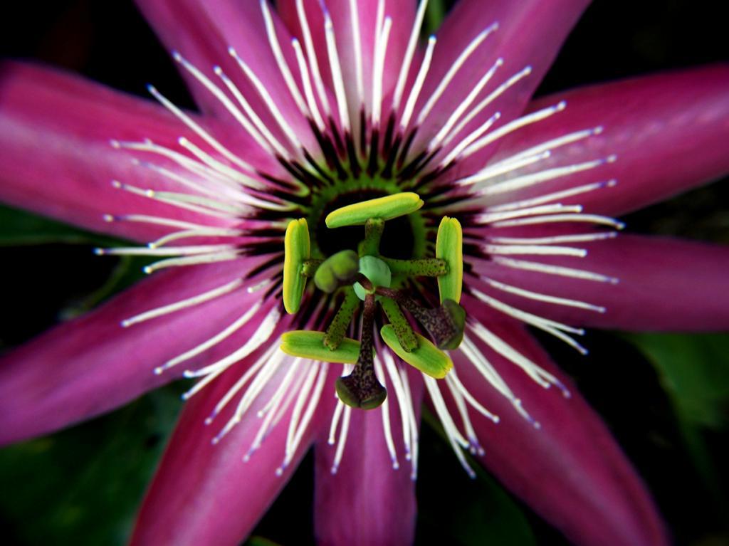 Рейтинг удивительных цветковых растений (21 фото)