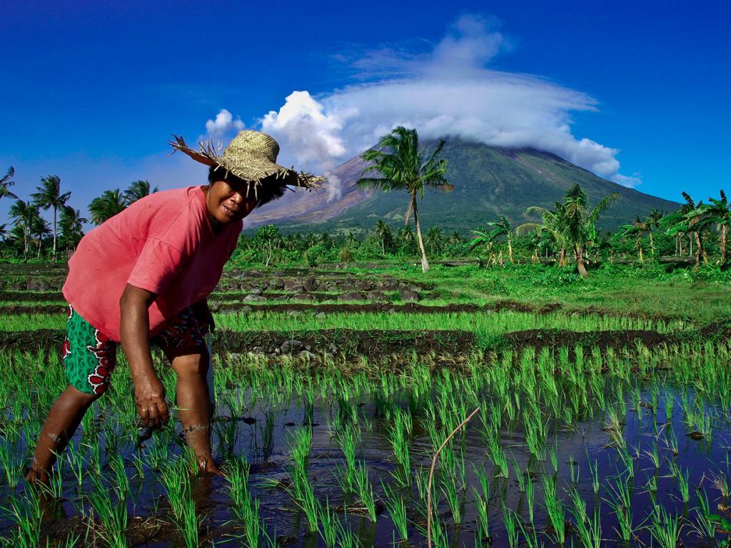 Последнее извержение было зафиксировано в 2013 году. Майон считается рекордсменом по извержениям среди остальных филиппинских вулканов. С 1600 года он извергался 50 раз. (IRRI Photos)