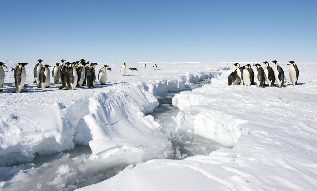 Антарктида. (Christopher Michel)