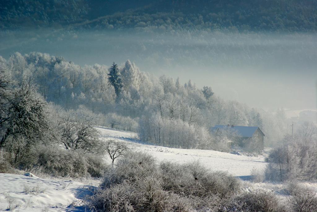 Заснеженный лес. (Marcin Bajer)