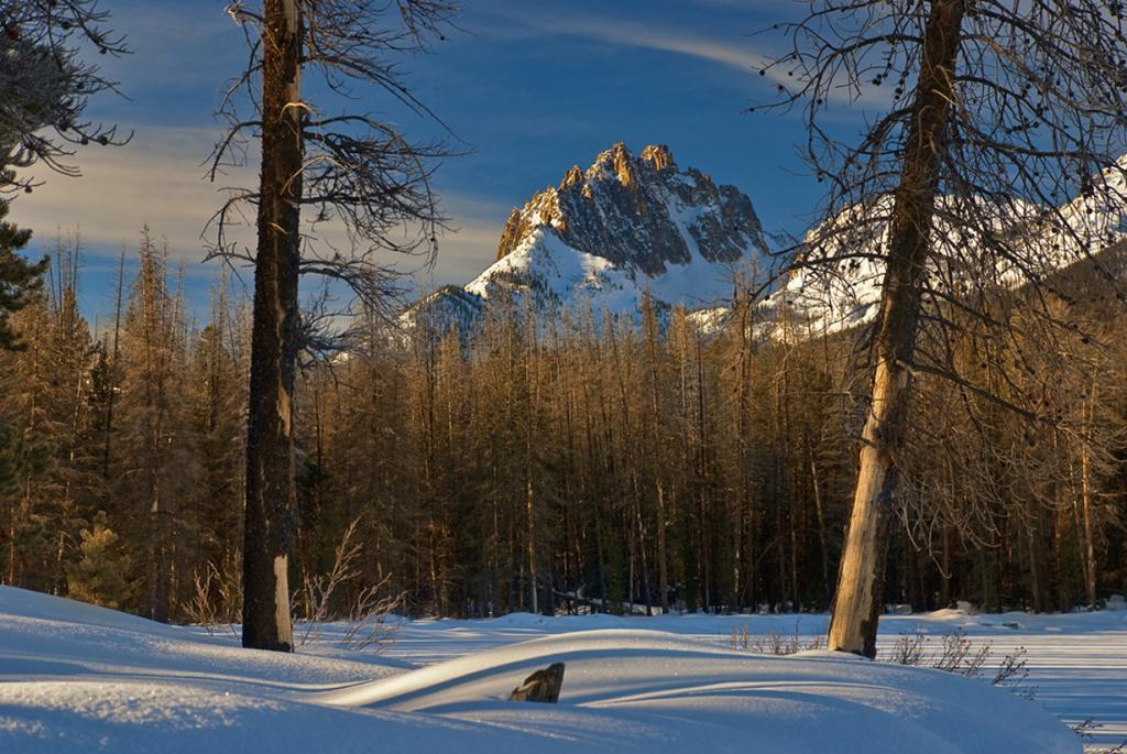 Заснеженный лес. (Charles Knowles)