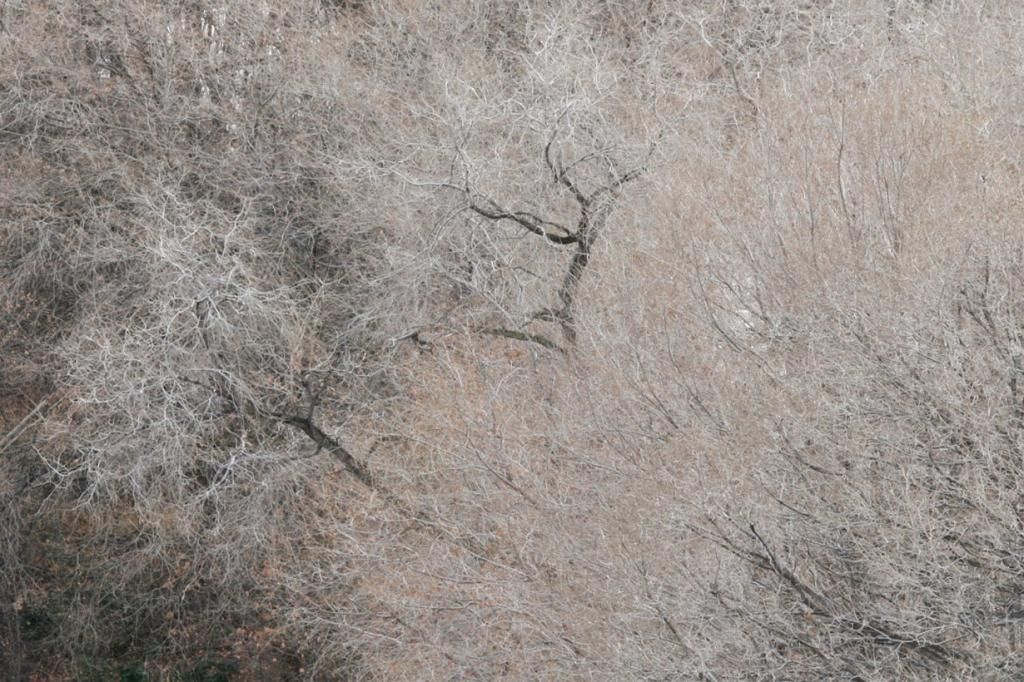 Заснеженный лес. (Jeremy Hiebert)