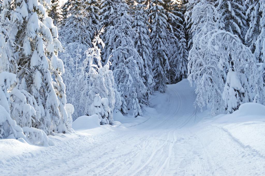Заснеженный лес. (Randi Hausken)