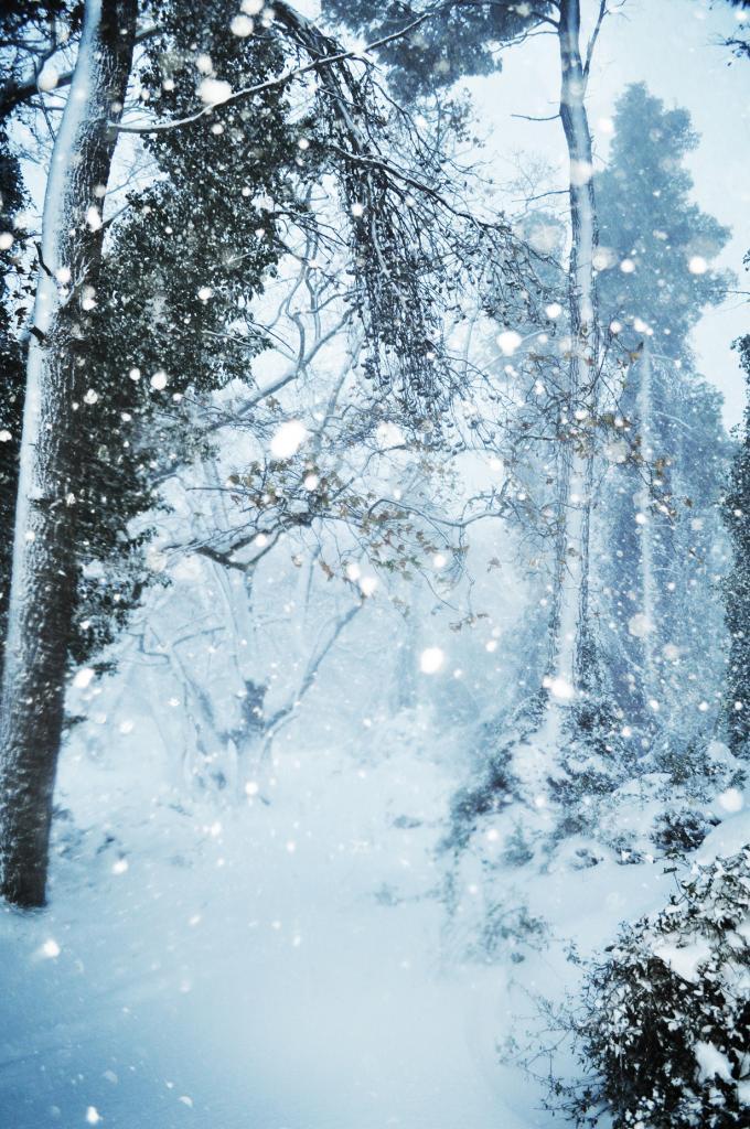 Заснеженный лес. (annie_stru)