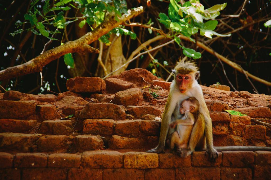 Шри-Ланка. Сигирия. (Jose Hernandez)