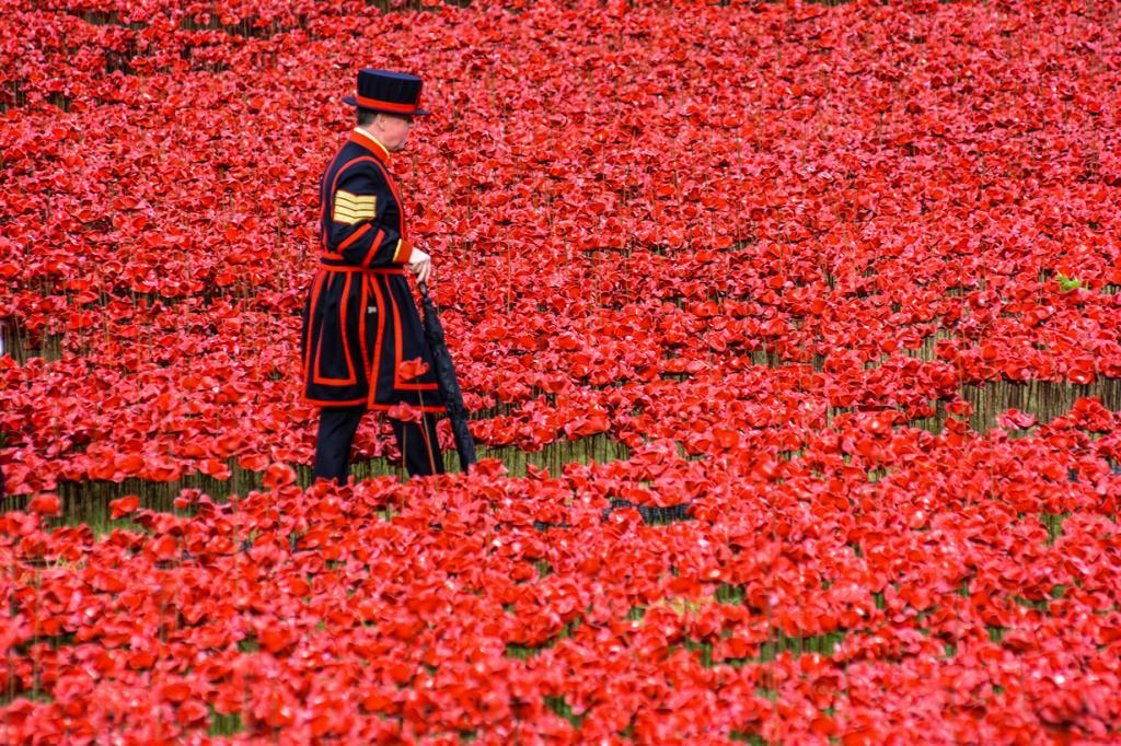 Кровавый ров у Тауэра. Почтение памяти погибших в Первой мировой войне (13 фото)