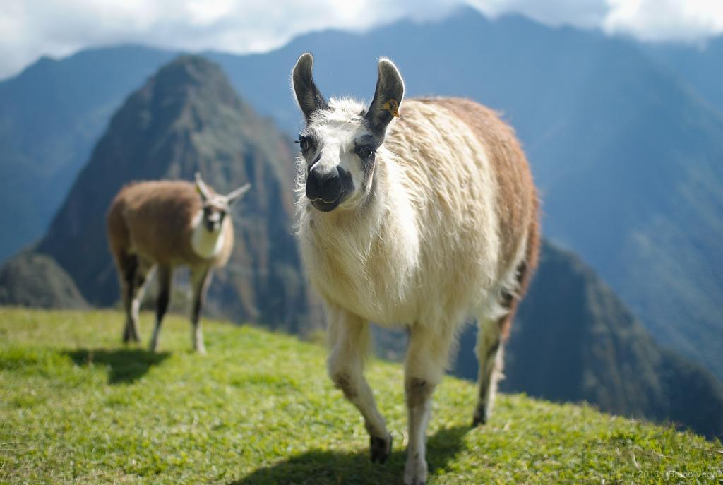 Перу. Мачу-Пикчу. (BrunoAmaru)
