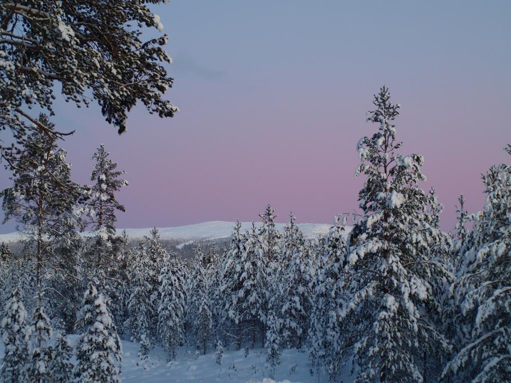 Заснеженный лес. (Nicklas Malmsjö)