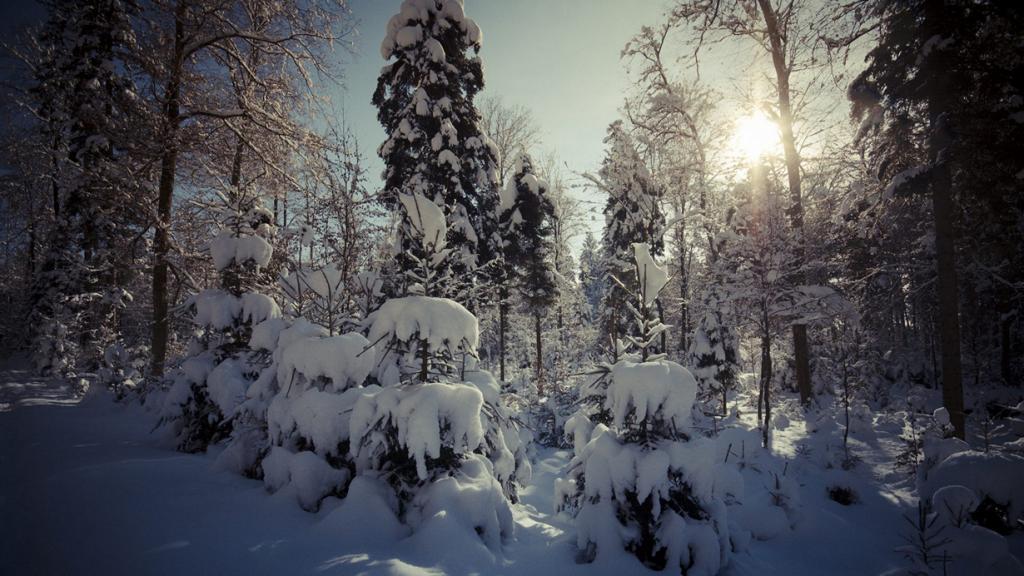 Заснеженный лес. (ponte1112)